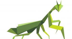 Roaming Mantis Takes the World by Storm